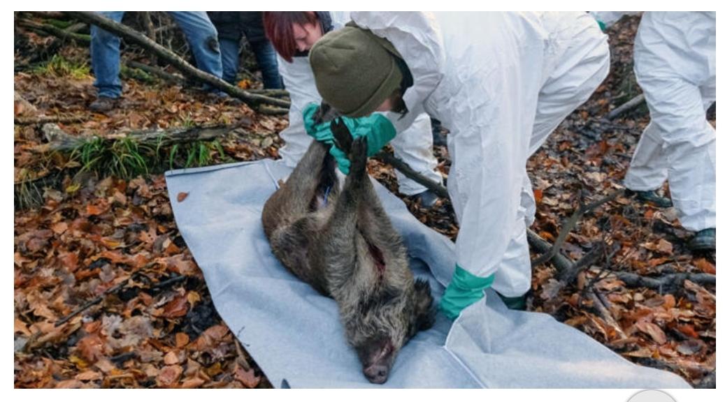 Almanya'dan virüse karşı Polonya sınırına çitli önlem
